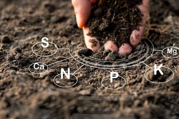 Chế phẩm vi sinh giúp cải tạo đất bạc màu, thoái hóa
