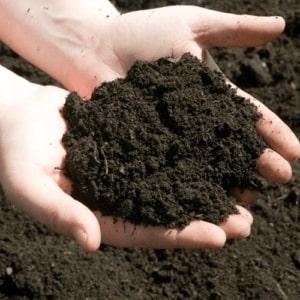 phân sạch hữu cơ EcoClean