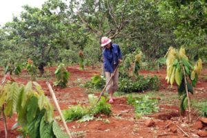Hướng dẫn cải tạo đất vườn cây ăn trái