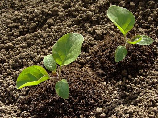 Cải tạo đất trước khi trồng cây ăn trái