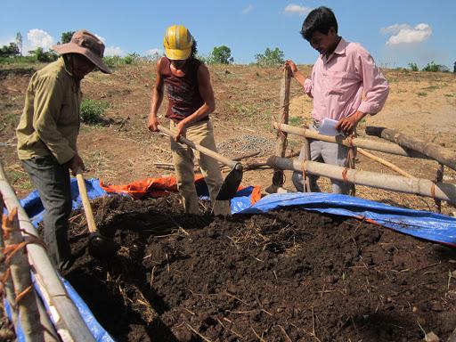 Dùng phân bò để cải tạo đất