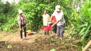 phân hữu cơ cho cây trồng