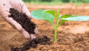 phân vi sinh hữu cơ và những điều cần biết