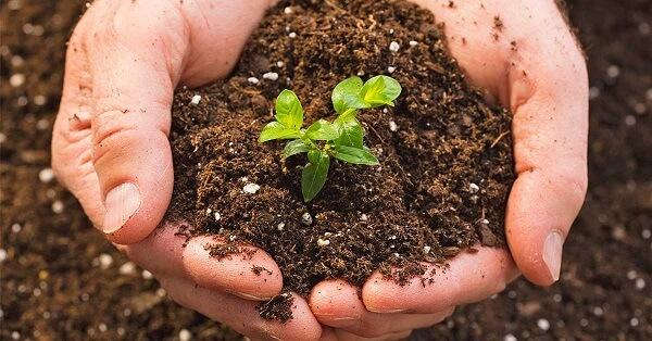 Phâ hữu cơ cho cây trồng