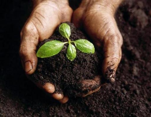 Đất trồng sẽ sạch và tơi xốp hơn với EcoClean Compost