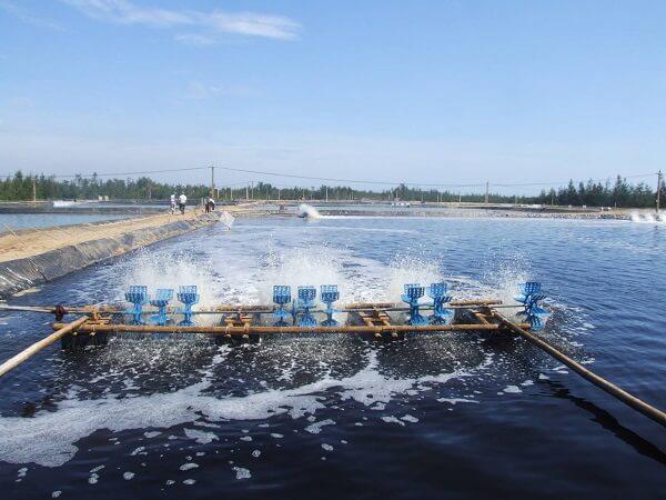 Quạt nước sục khí oxy - Cách xử lý nước hiệu quả