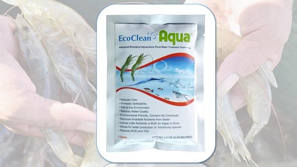 Quy trình nuôi tôm thẻ chân trắng bằng chế phẩm vi sinh vật