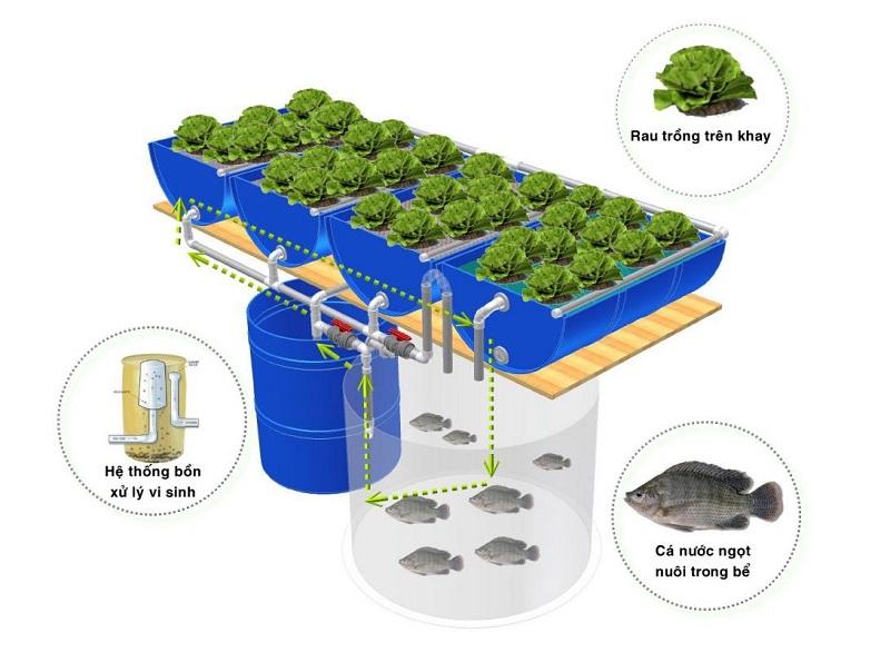 Mô hình Aquaponics - Trồng rau nuôi cá trên sân thượng độc đáo không cần chăm sóc