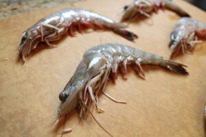 Nguyên nhân tôm lột chết hàng loạt gây thiệt hại to lớn cho bà con nuôi thủy sản