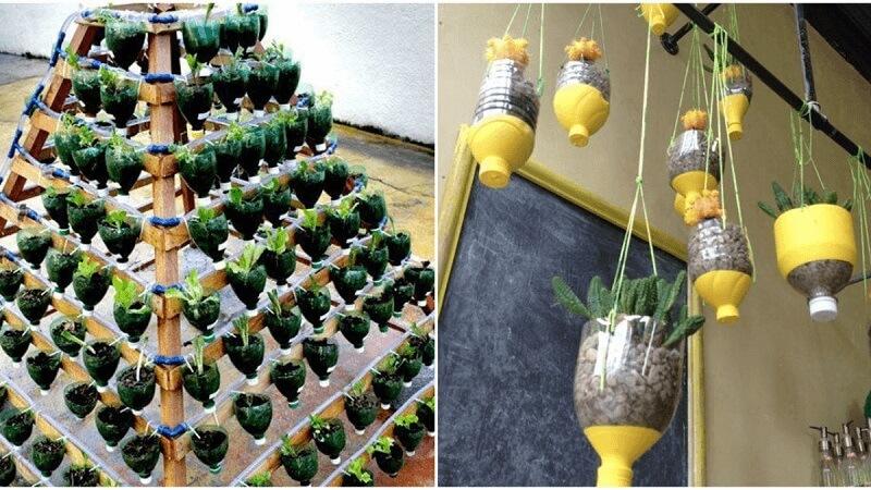 Phá cách với mô hình trồng rau trong chai nhựa kim tự tháp