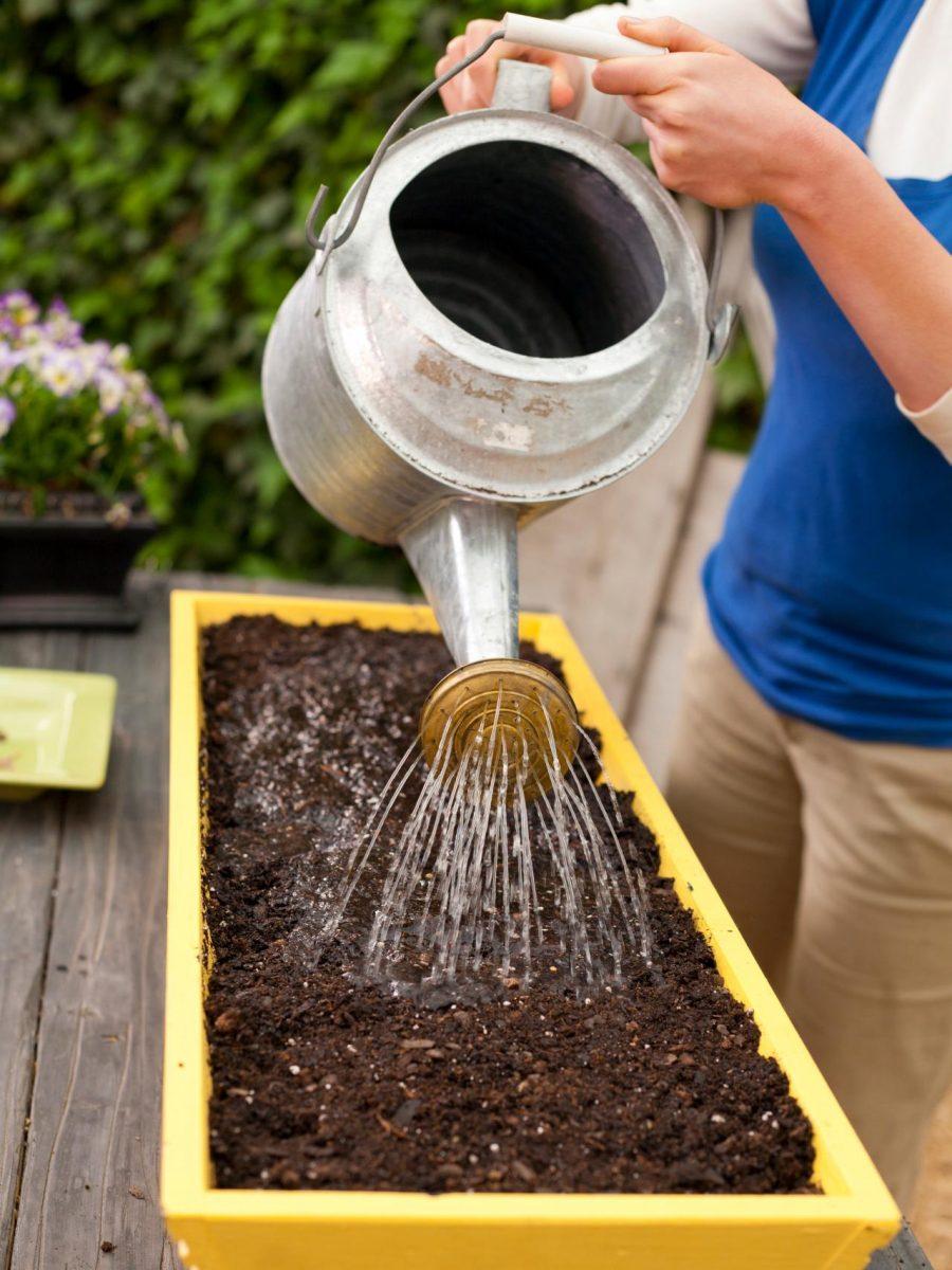 Tưới nước cho đất ẩm là một trong cách gieo hạt các giống rau hiệu quả