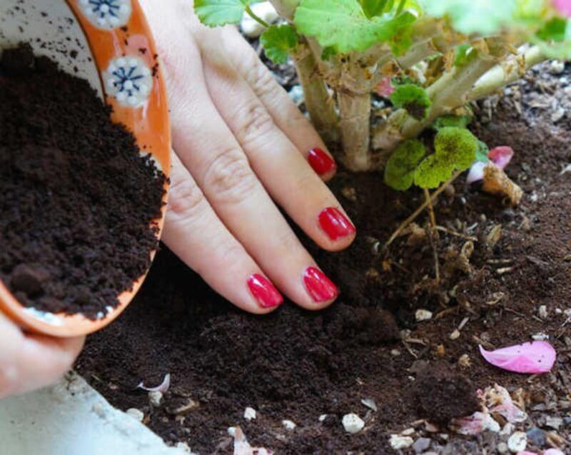 cách bón phân compost hiệu quả